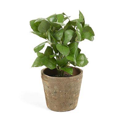 Plantă artificială BASIL